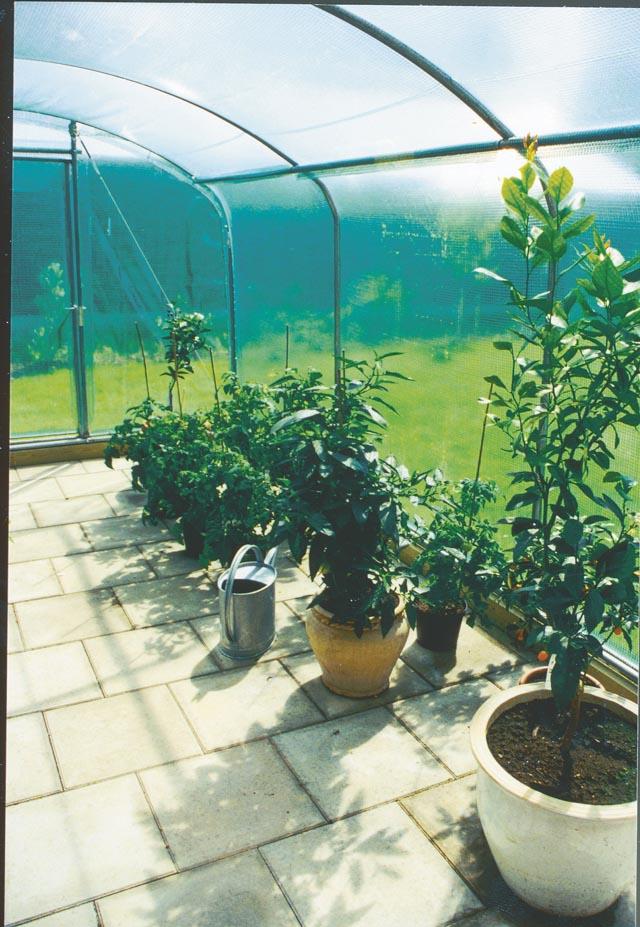 Odling i ett lättklätt från Classicum växthus
