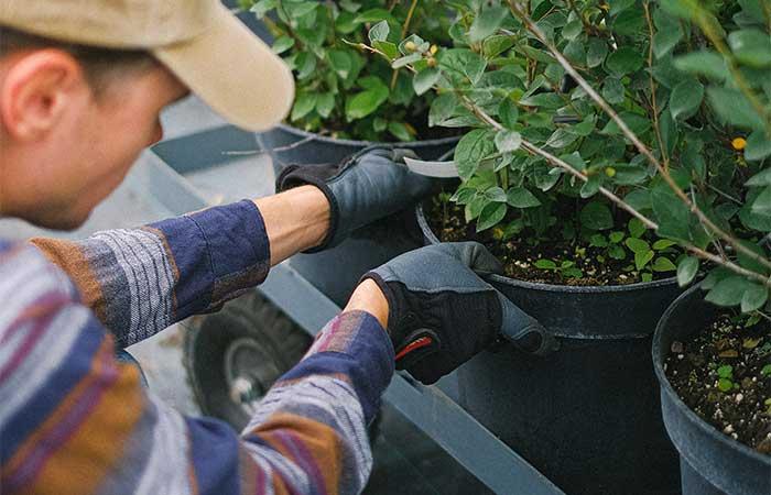 Trädgårdshanskar och handskar för alla tillfällen i trädgården